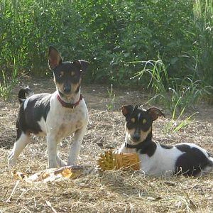 Terrier girls