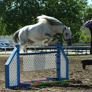 Regal jumping