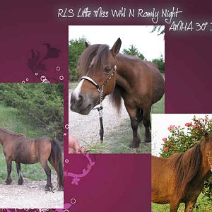 RLS Little Miss Wild N Rowdy Night
