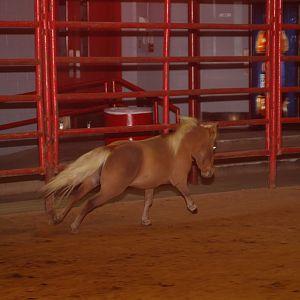 Liberty Spooktacular Miniature Horse Show