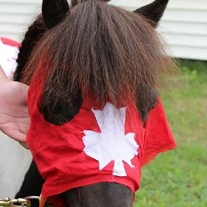 Canada Day 2012 (3)