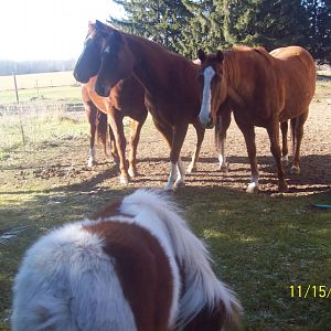 Horse's meeting Eowyn for the first time