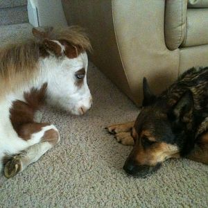 Snickers and Coda