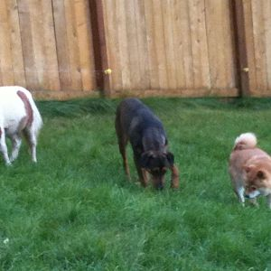 """Snickers and part of his """"herd"""""""