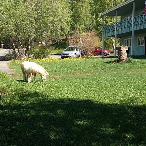 Mowing my Grandpas lawn