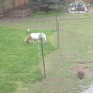 Sectioned off the yard to try and regrow grass and he still managed to get over to it