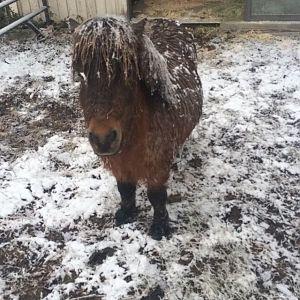I like snow
