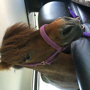 Riding in Hummer. No biggie