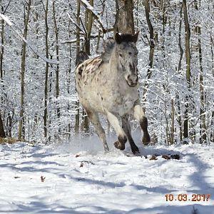 Yukon Running