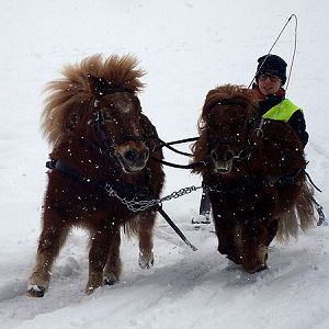 Driving a sleigh the pony way :)