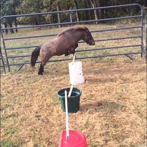 Jumping 2017