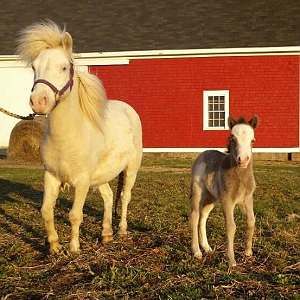 Willo Forest Luna Lovegood and her 2018 filly, MH Wingardium Leviosa