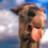 Camelman
