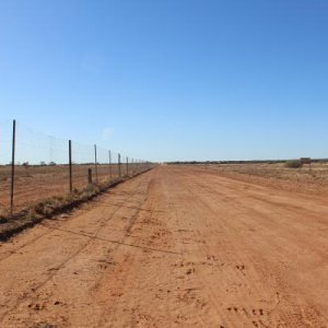 Wild Dod Fence into Queensland