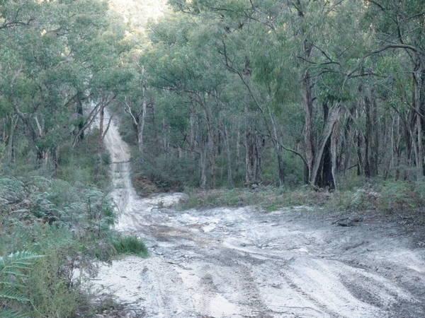 Paddys Swamp, Geelong VIC