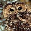 Owlcreekok