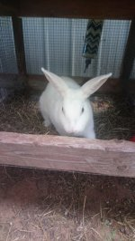 rabbits 3.jpg