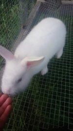 rabbits 11.jpg