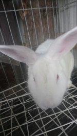 rabbits 15.jpg
