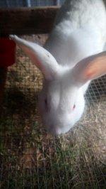 rabbits 23.jpg