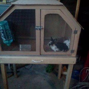 Oreo and Cleo's home