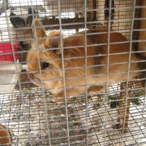 rabbits 2-8-2012 006
