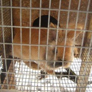 rabbits 2-8-2012 007