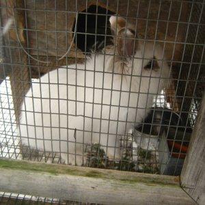 rabbits 2-8-2012 003