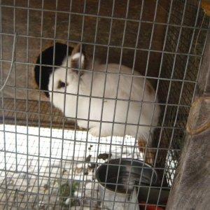 rabbits 2-8-2012 004