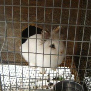 rabbits 2-8-2012 008