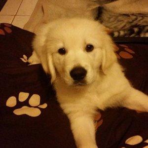 Koko in seinem neuen Zuhause