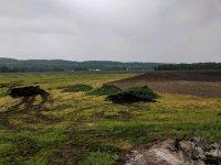 7 Oasis field and Trailer Tree Stump.jpg