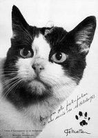Felicette Space Cat 1.jpg