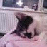 pinkcat85