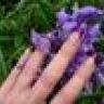 Peppercorn Nails