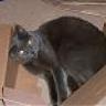 beautycat