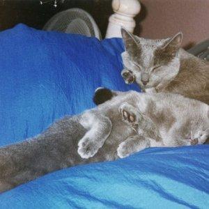jasmine and anushka
