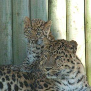 New cub at Marwell Zoo