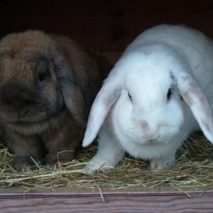 toffee & snowy  my babies I regretfully have to re-home