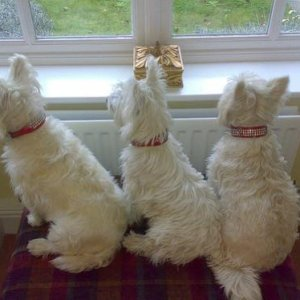 From left to right - Honey Bunny, Louby Lou and Bessie Boo!