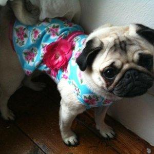 hollie in her dress x