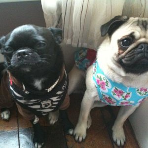marni n hollie in the one of there outfits x