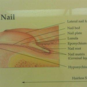 nail at a 3/4 view