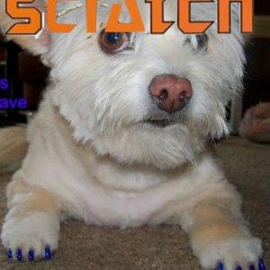gelish dog scratch