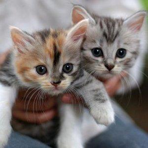 cutest kittens 500