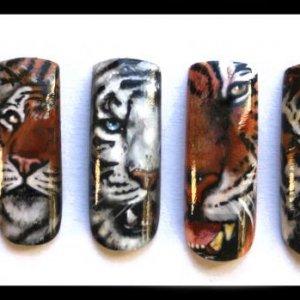 tiger nails set