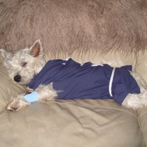 Molly after her operation.