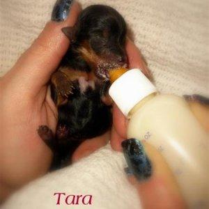 Tiny Tara 2oz