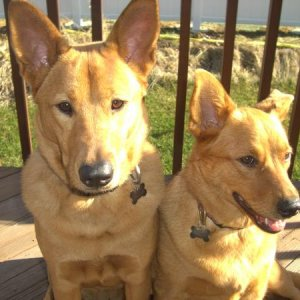 Ginger & Gracie
