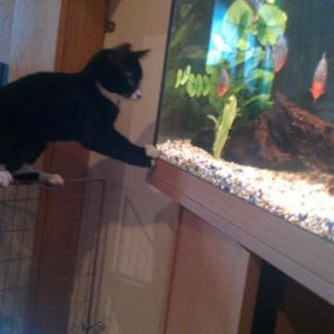 Tito trying to catch a fish